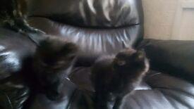 Lovely kittens for salr ready to go