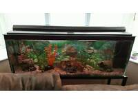 ? tropical fish tank accessories