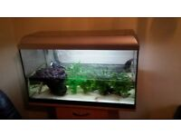 Fish tank full set up with tropical fish and 2 musk turtles