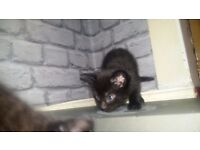 kittens for rehome. 4 months old. will go to rspca if not gone by 15th