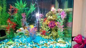 130l Aquarium and Equipment for Sale