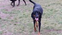 DogWalker (for hire) South Barrie