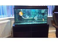 fish tank wigan