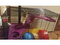 Syrian Hamster inc. Cage and accessories