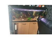 4ft fluval fishtank for sale