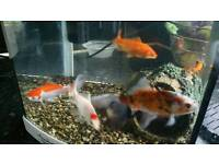 Coldwater fish ×5