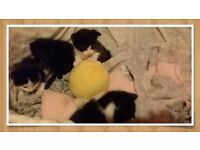 beautiful kittens want loving home
