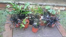 A sorted plants