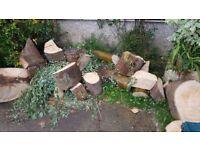 Free Wood Orpington - Eucalyptus