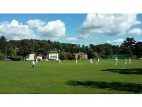 Do you want to play cricket? Come and join a family-friendly club near Farnham.
