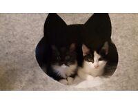Lovely kittens for loving family