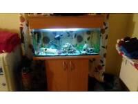 Fish tank aquarium and stand