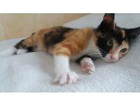 A Cute kitten girl for sale