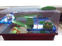 2 hamsters for sale