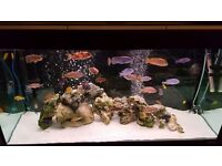 Nice fish tank with fishes
