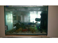 Complete Fishtank with fishes and Accessories