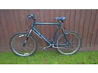 Mens Adult Raleigh bike with new mountain bike tyres