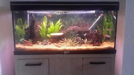 180 Litre Fish Tank and Accessories