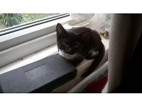 Beautiful, playful and friendly female kitten