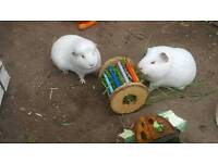 Small animal boarding for rabbits, guinea pigs, rodents, birds and reptiles
