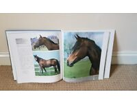 Horse gift set bundle. Would make a great gift