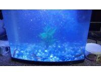 Fishtank mint looking tank