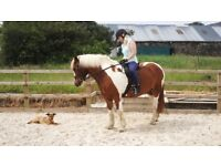Im looking for someone to part loan my lovely wee horse every second weekend