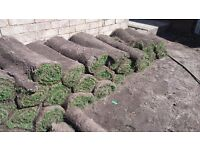 Top quality garden Turf