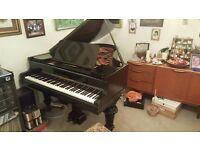 Antiqued Ebonisded Rod Ibach Sohn Grand Piano / restored,restrung,action,case - Beautiful Tone