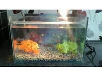 Aquarium clearseal 18x12x12