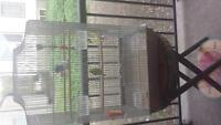 2 budgies + large cage