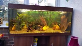 FISH TANK FOR SALE JUWEL LARGE