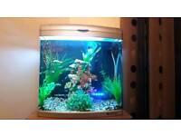 BOYU 80 litre fish tank