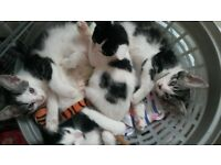 9week old kittens for sale