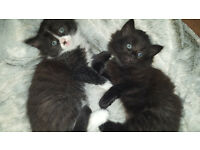 Two cute kittens looking for a new home