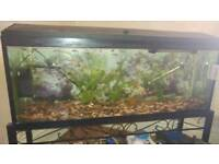 Beautiful 170 litre tropical fish tank