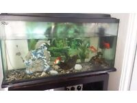 4 fishes with tank for sale