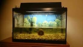 Fish tank +one gold fish