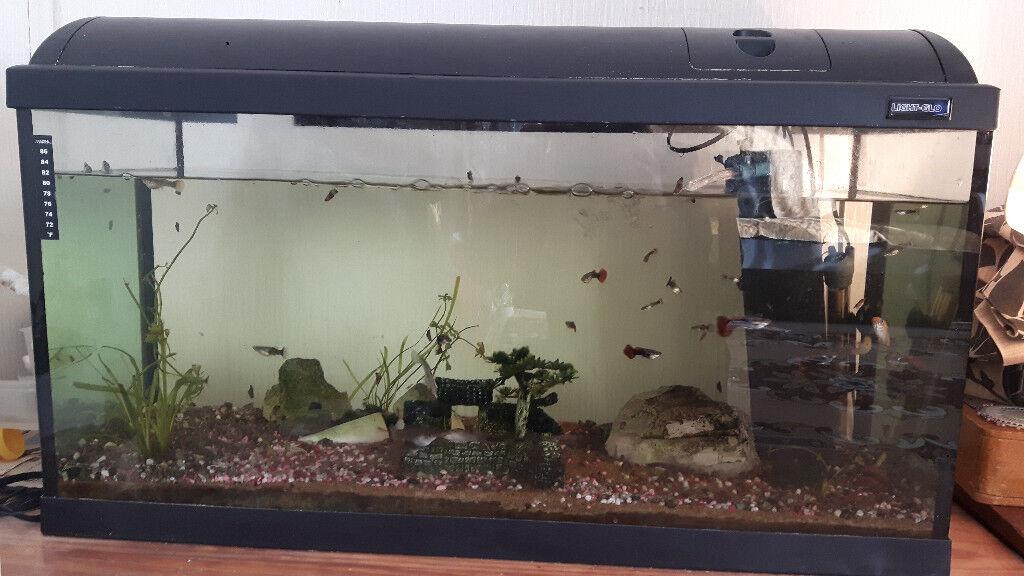 Fish Tank + Fish + Snails + Shrimps + Accessories