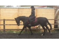 16.2 TB Mare for loan/share