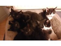 6 Beautiful kittens available from 22 Oct