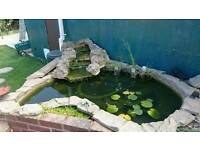 Pond with filters for sale