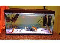 4 Goldfish + Fish Tank