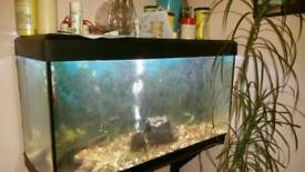 Fluval 180 fish tank Marine or tropical