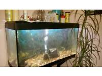 Fluval 180 fish tank Marine or tropical