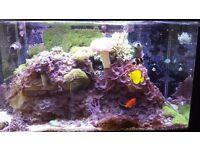 Marine Fish Tank Aquarium with fish Red Sea Max RSM 250 plus Rock, corals and fish