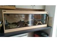 Yellow rat snake plus tank