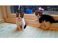 Kitten's boy and girl