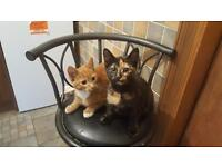 No more replies please - I have been innundated! Two gorgeous kittens need a permanent home.