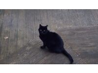 Black cat free to a good home as owner deceased